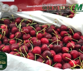 Cherry Đỏ New Zealand Size 28+ Red Pearl