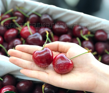 Cherry Đỏ New Zealand Size 32+ Southern Fresh