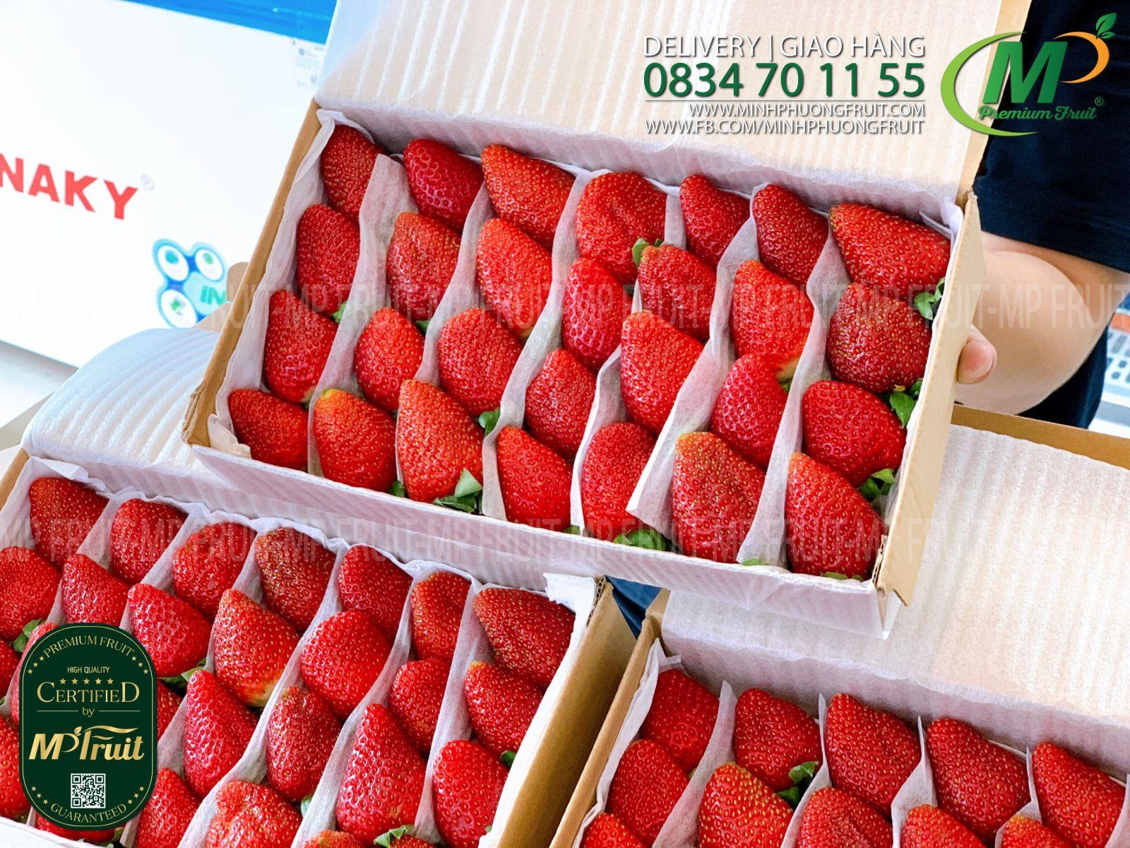 Dâu Giống Mỹ Wonderland Farm Size 28 trái Hộp 500g tại MP Fruits