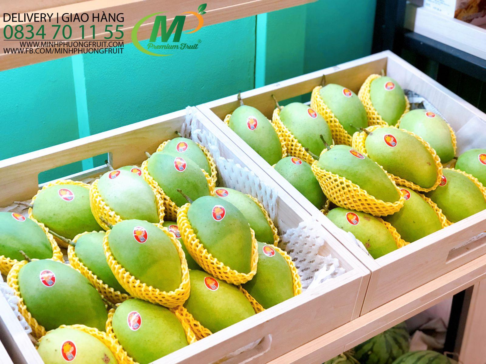 Xoài Cát Hòa Lộc Mango King - MP Fruit