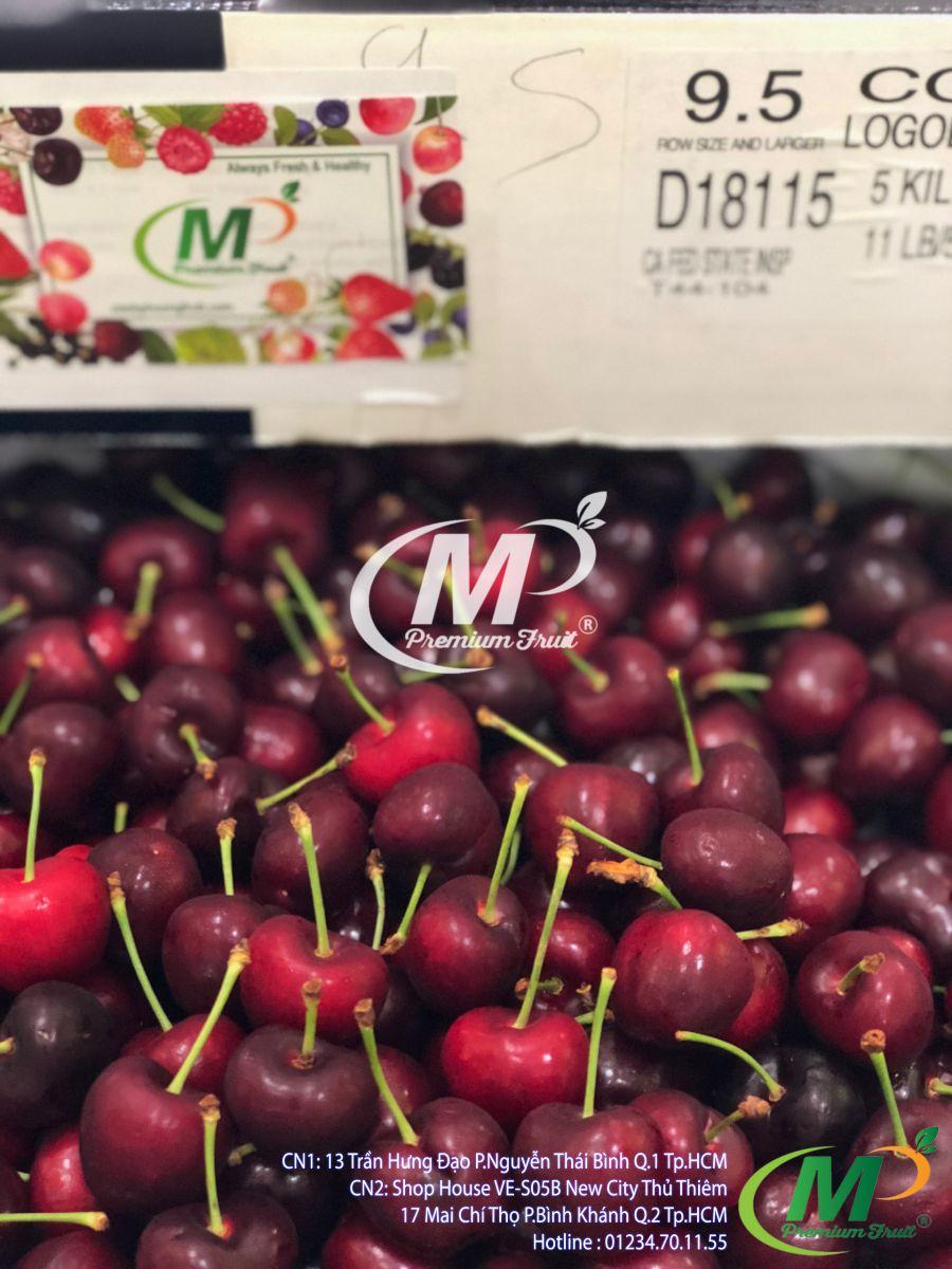 Cherry Đỏ Mỹ tại MP Fruits