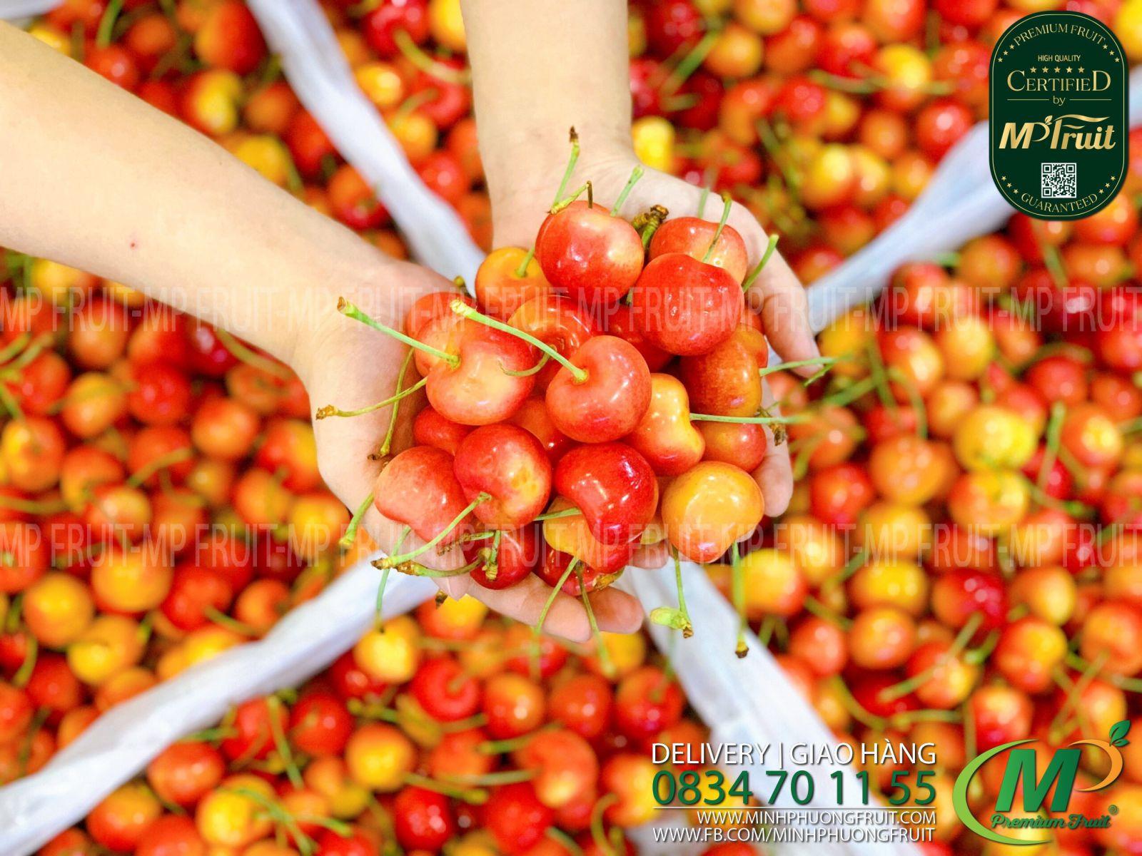 Cherry Vàng Mỹ - Rainier Cherry USA tại MP Fruits