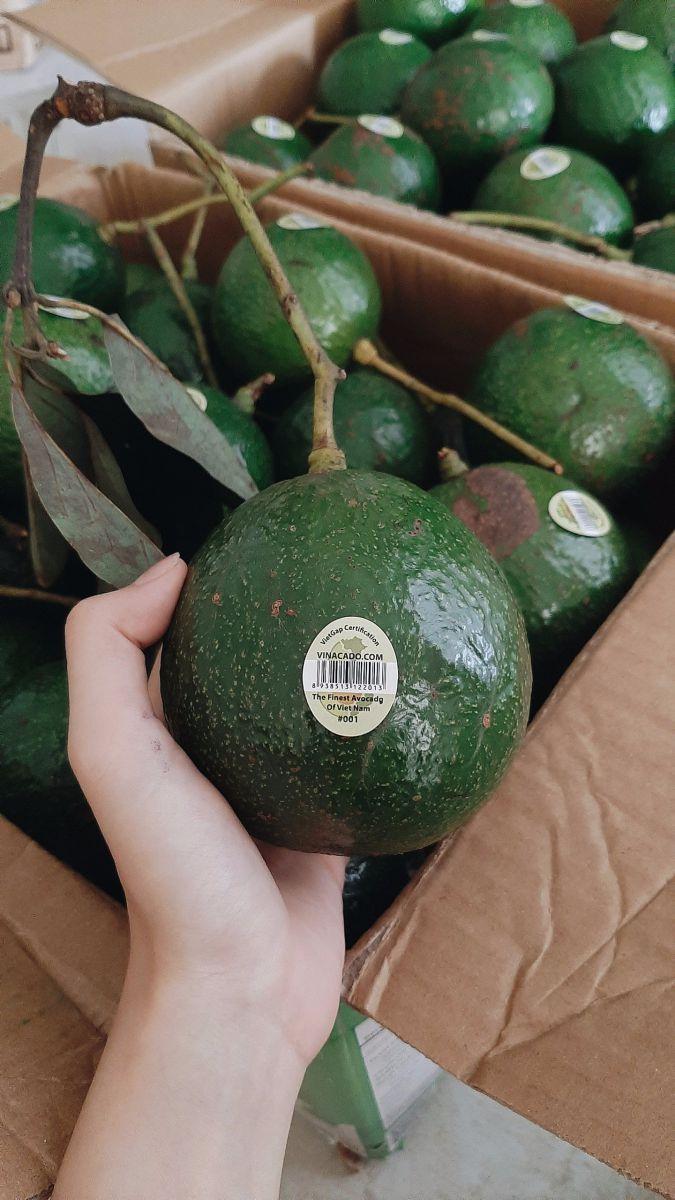 Nguồn gốc của giống bơ Booth làm điên đảo giới bơ Việt Nam.