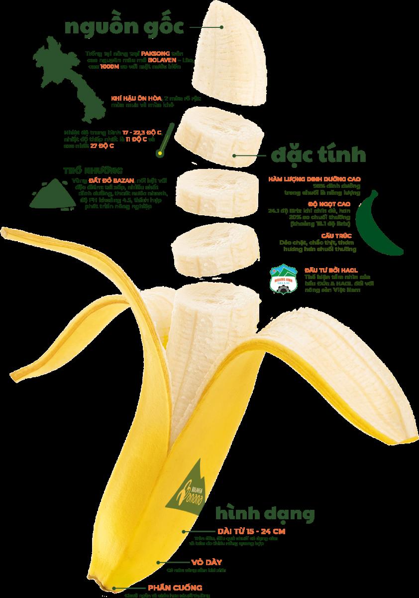 Nguồn Gốc - Đặc Tính - Hình Dạng Chuối Bolaven - MP Fruits