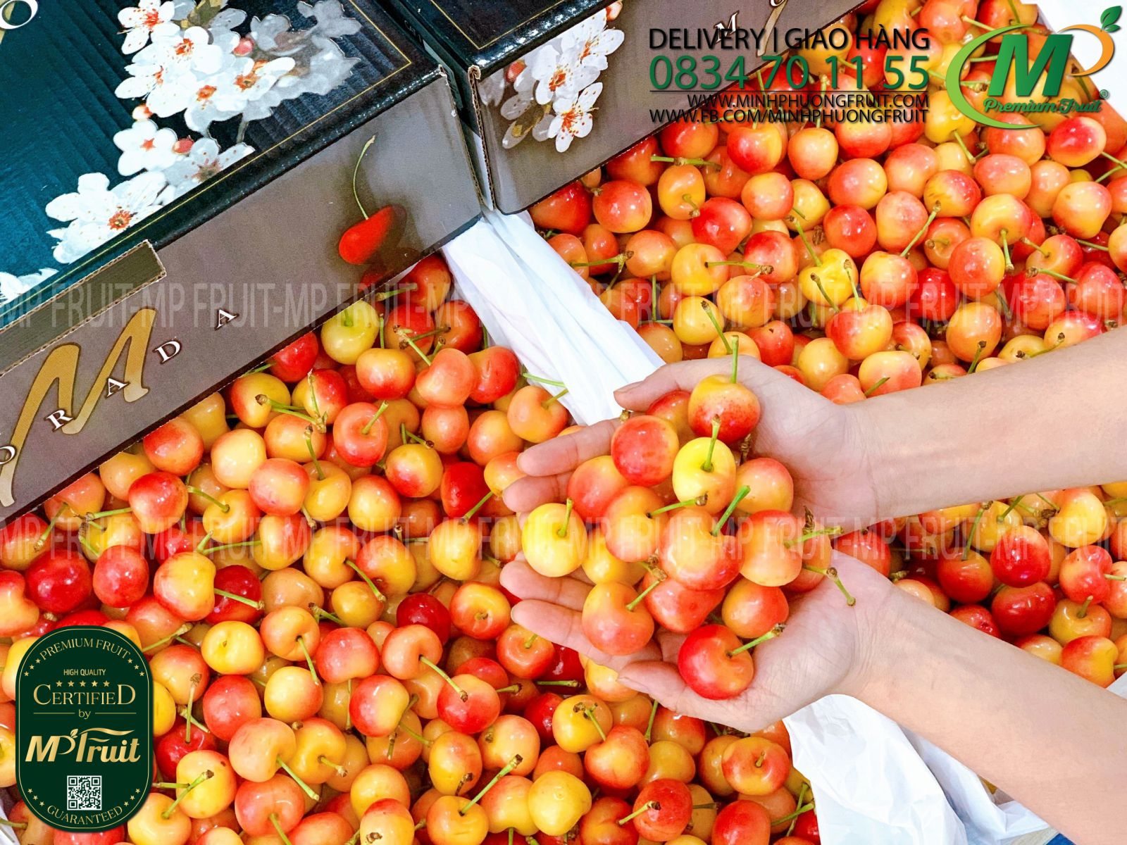 Cherry Vàng Mỹ - Rainier Cherry USA tại MP Fruits