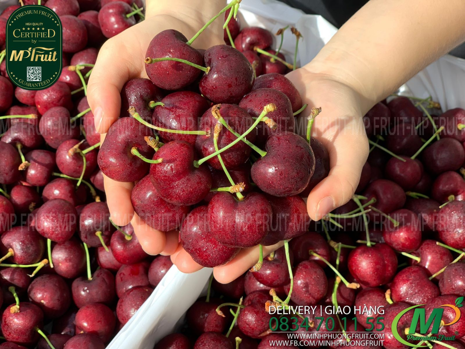 Cherry Đỏ Jealous Canada Size 8.5 tại MP Fruits