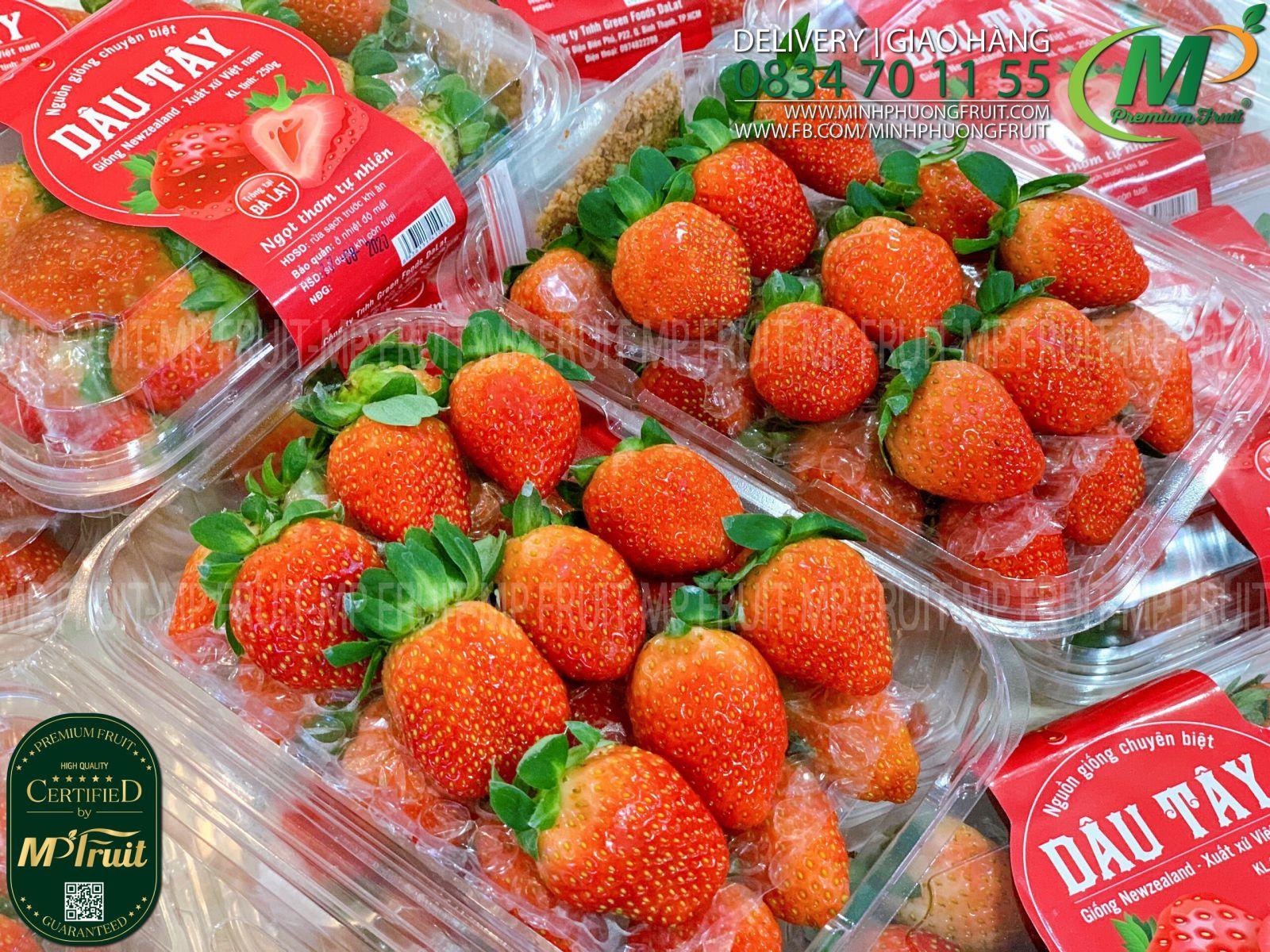 Dâu Tây Giống New Zealand tạp MP Fruits