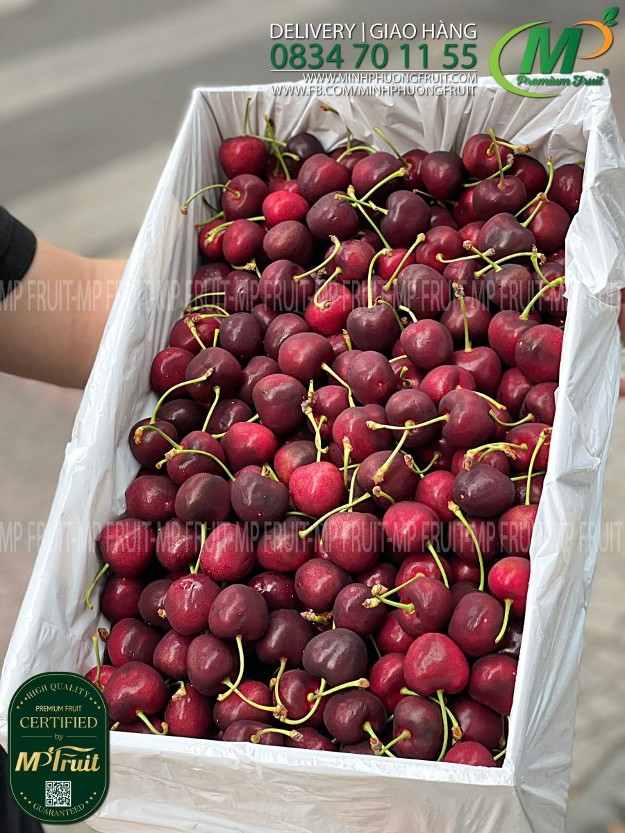 Cherry Đỏ New Zealand Size 28+ Red Pearl tại MP Fruits