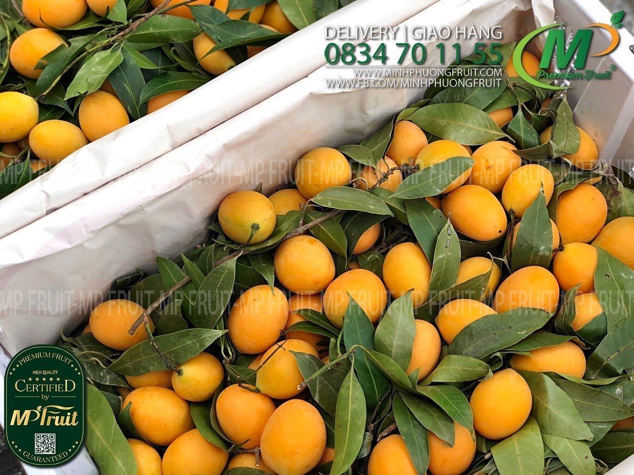 Quả Thanh Trà Thái Lan tại MP Fruits