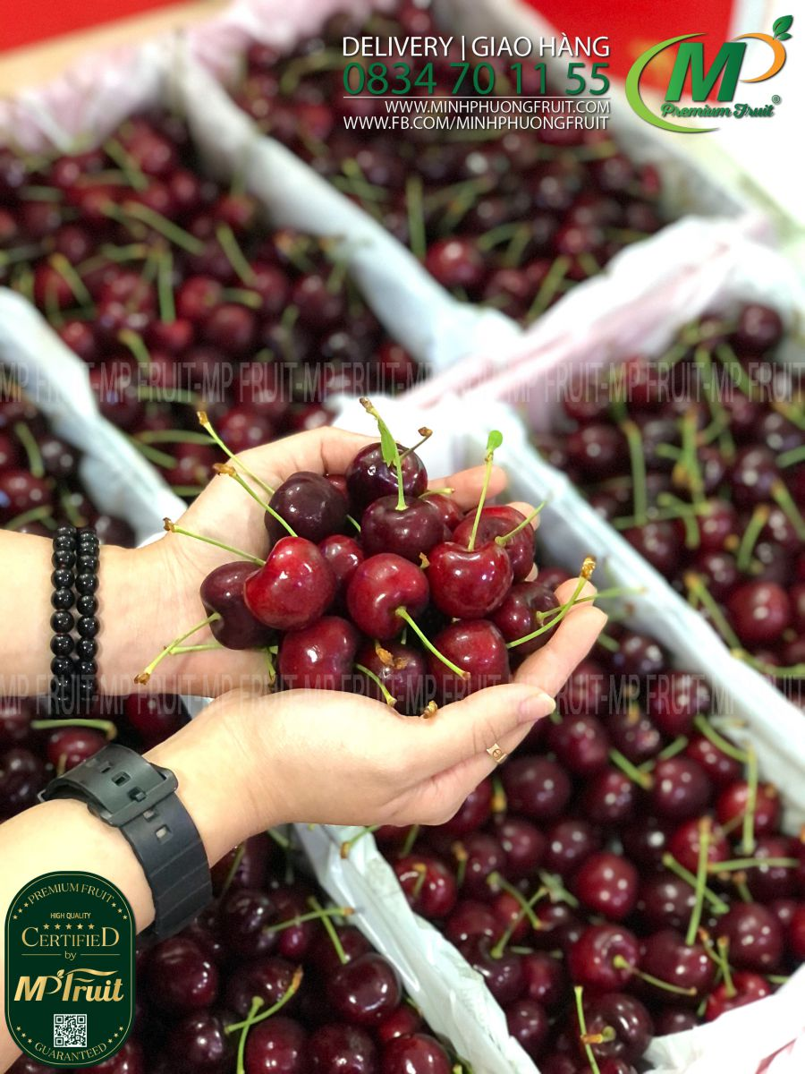 Cherry Đỏ Tasmania Úc Size 28-30 Reid Fruits tại MP Fruit