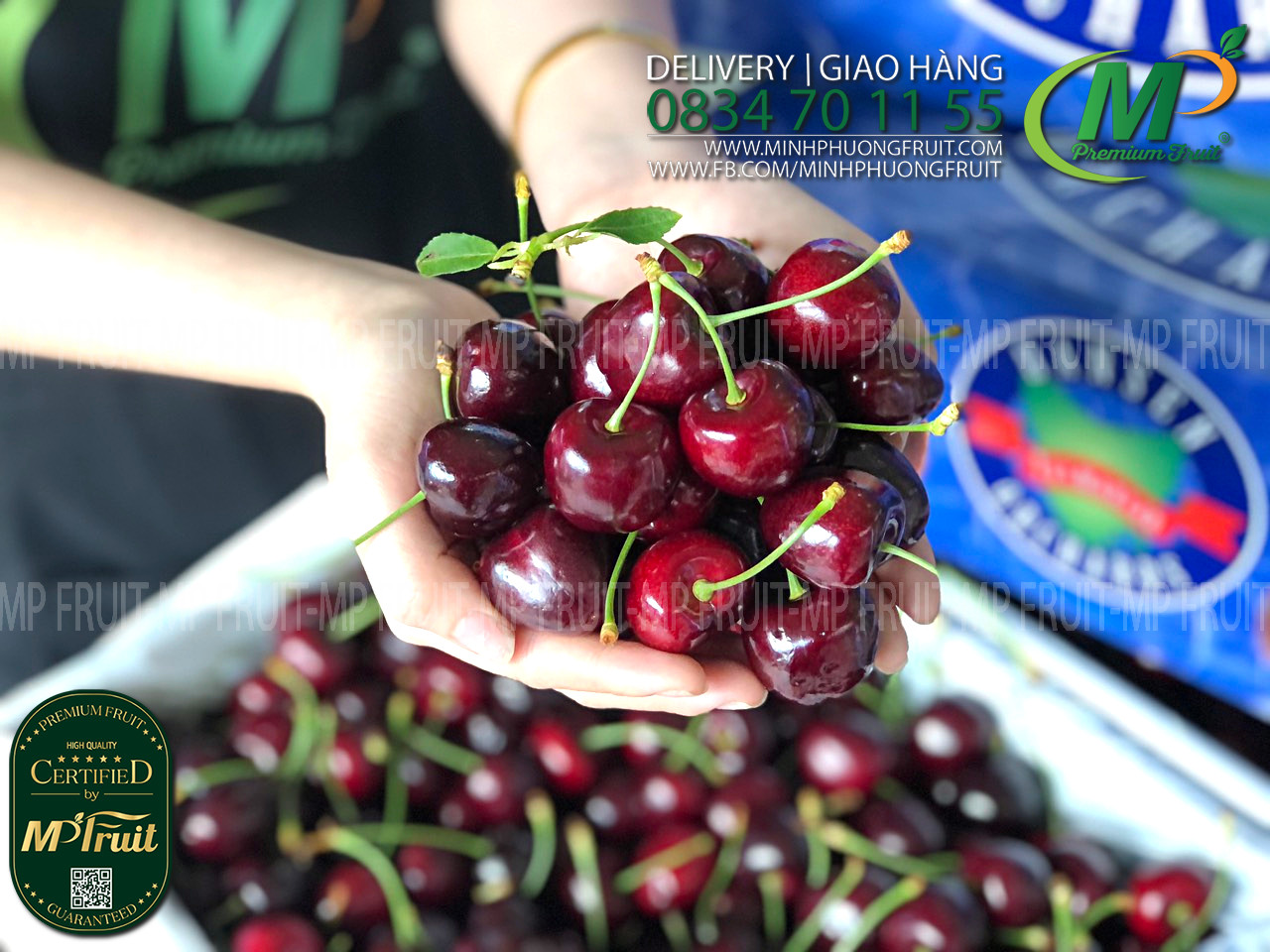 Cherry Đỏ Tasmania Úc Size 28-30 Hansen Orchards tại MP Fruit