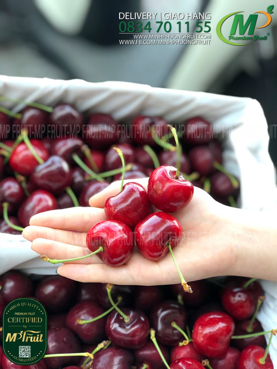 Cherry Đỏ New Zealand Size 32+ Southern Fresh tại MP Fruits