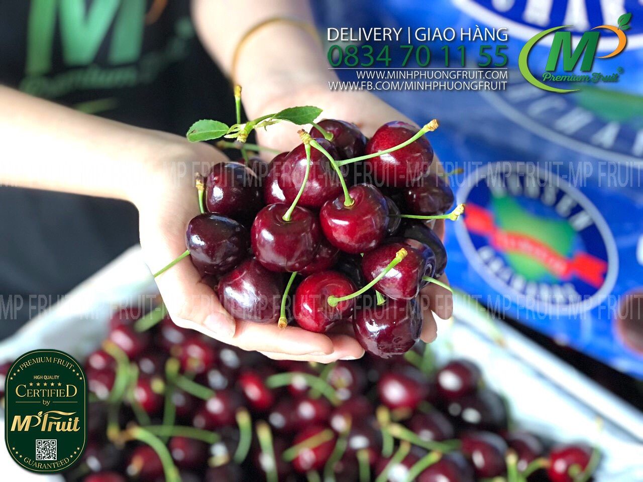 Cherry Úc Tasmania Giống Sentinial Tại MP Fruit
