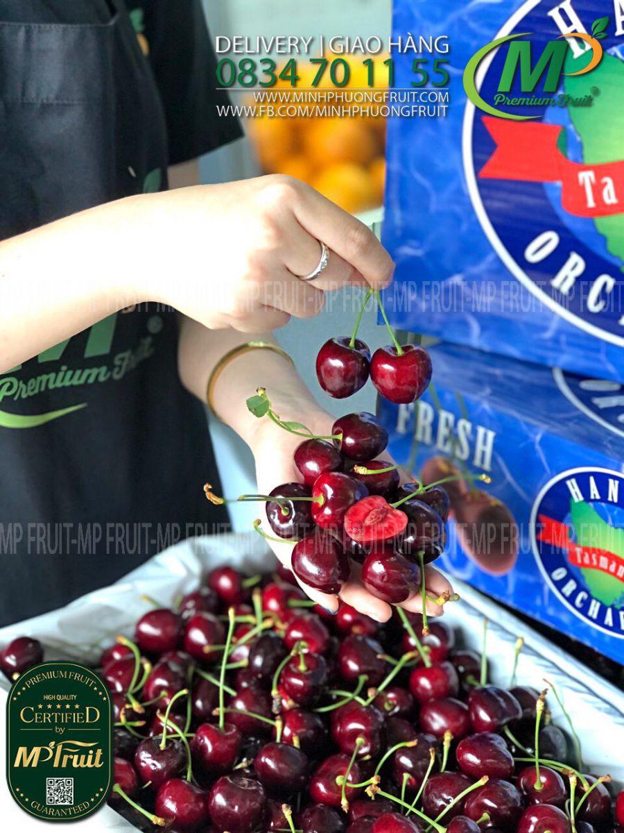 Cherry Đỏ Tasmania Hansen tại MP Fruits