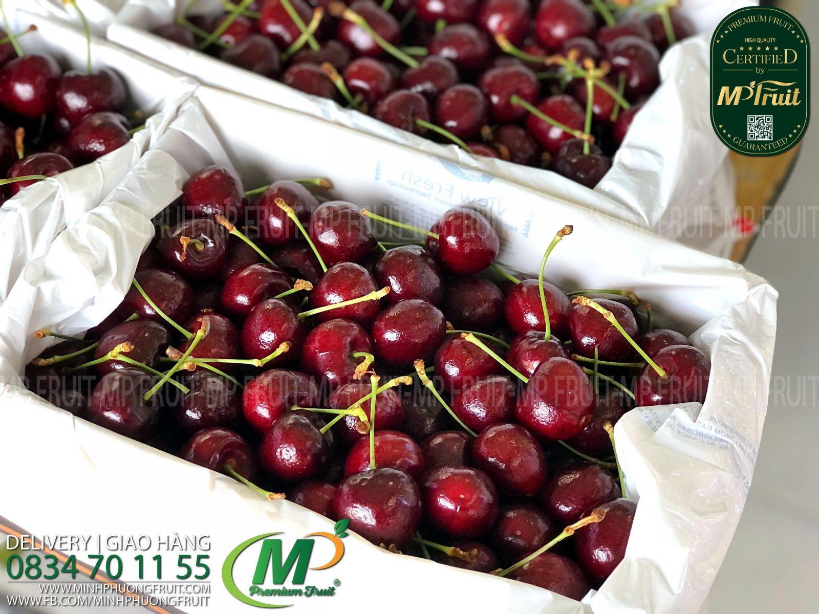 Cherry Đỏ Tasmania Size 32-34 | 43° South thương hiệu uy tín của Úc tại MP Fruit