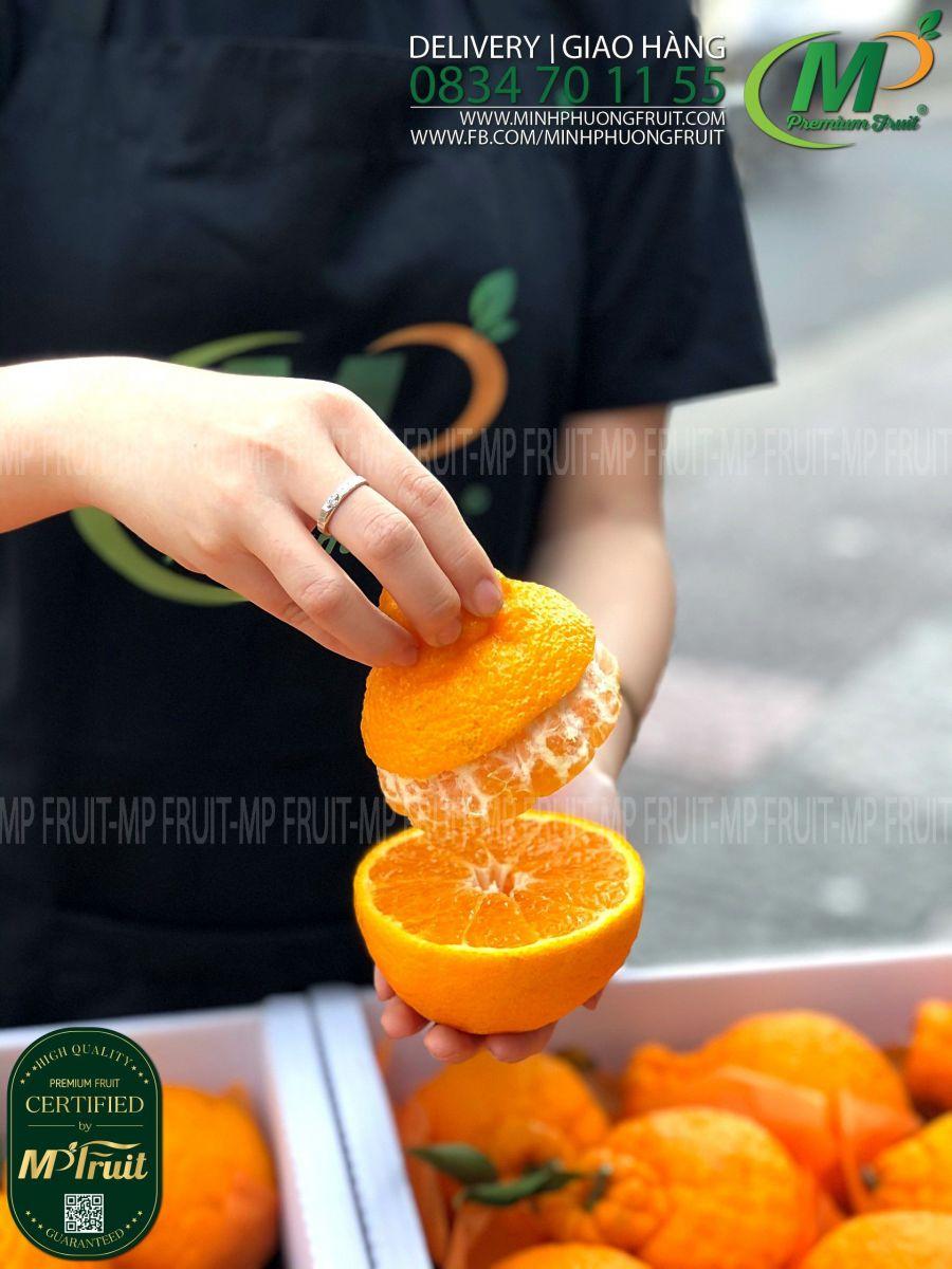 Quýt Chum Hanrabong Hàn Quốc tại MP Fruits