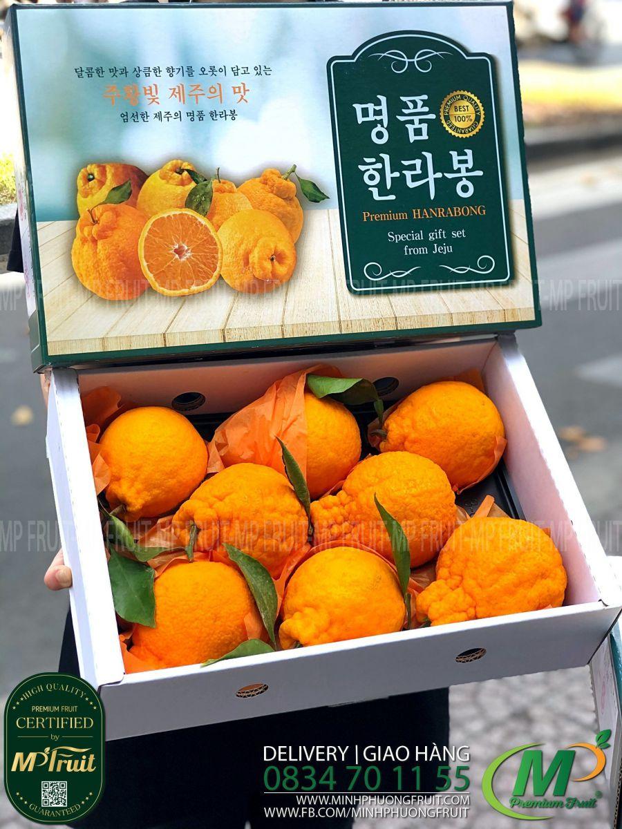 Quýt Chum Hanrabong Hàn Quốc | Hộp Quà Tặng 3kg tại MP Fruits