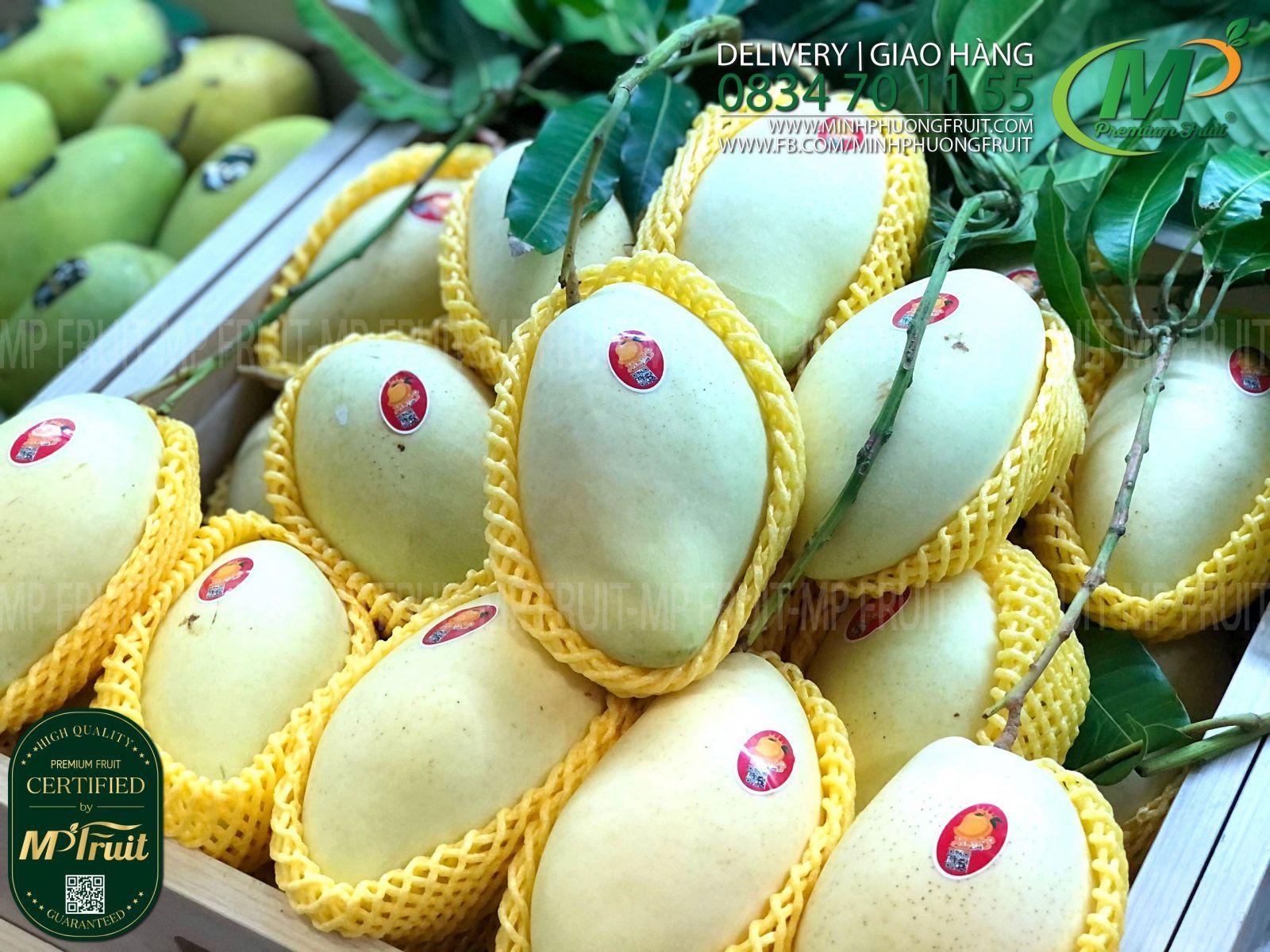 Xoài Cát Hòa Lộc Da Vàng Mango King tại MP Fruit