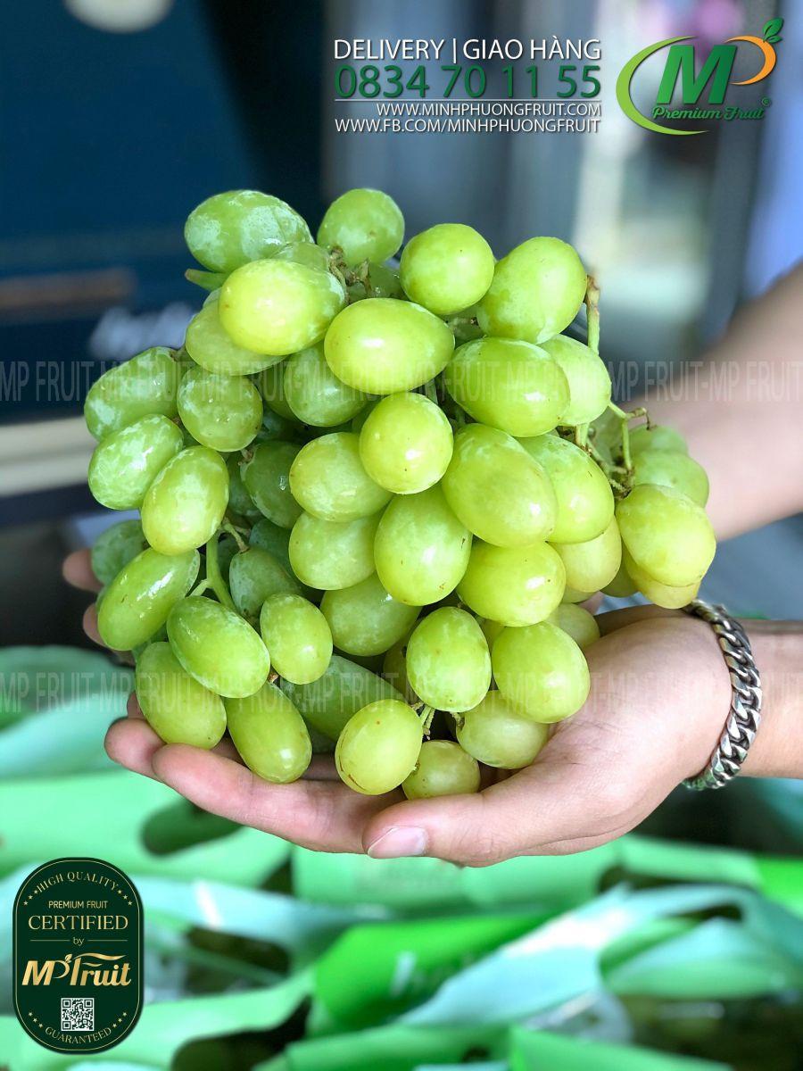 Nho Xanh Sugar Crisp Úc   Hello tại MP Fruits