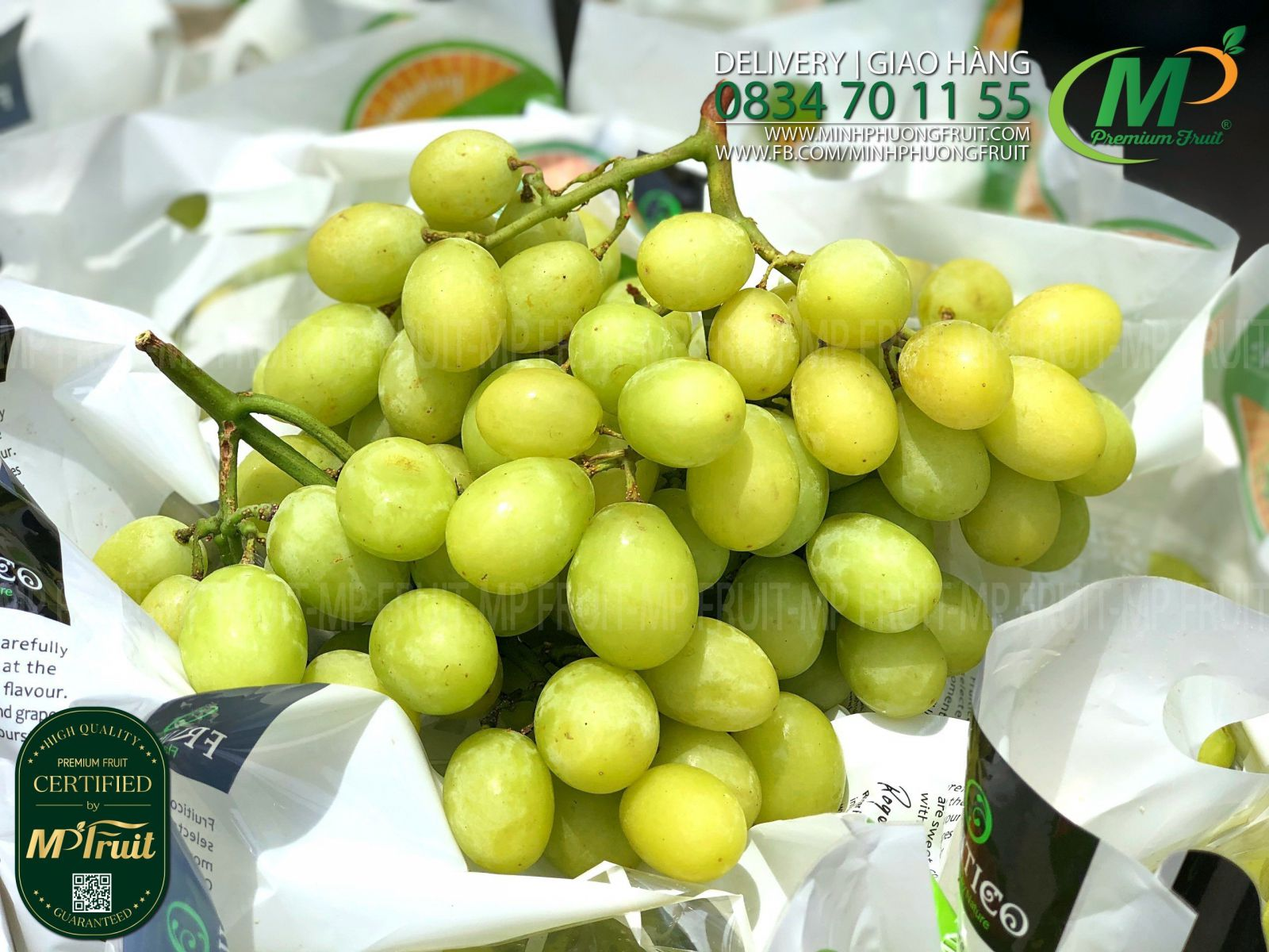 Nho Xanh Autumn Crisp Úc   Fruitico - size Jumbo quả siêu to - MP Fruit