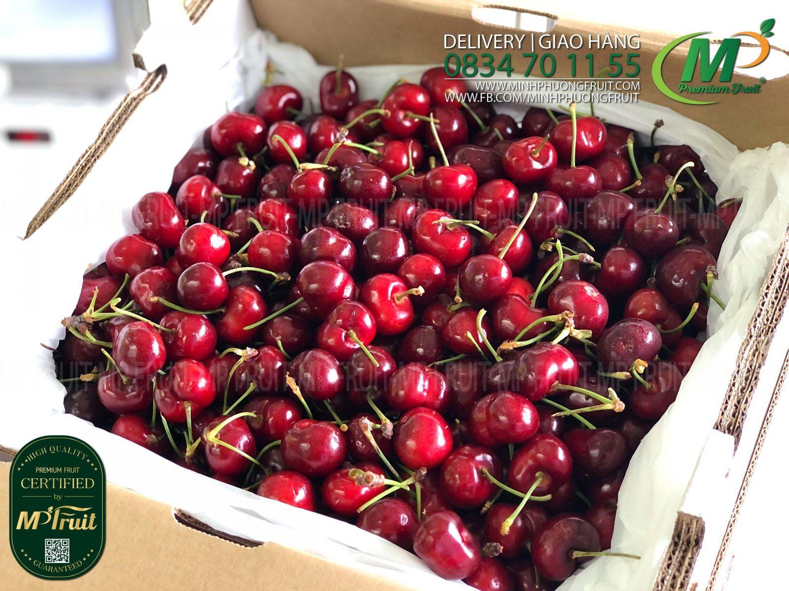 Cherry Đỏ Mỹ Size 8.5 | Sequoia tại MP Fruits