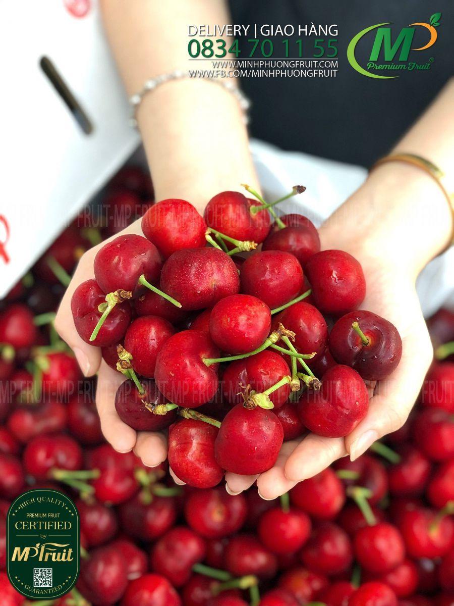 Cherry Đỏ Mỹ Size 9.5 | Hilltop tại MP Fruits