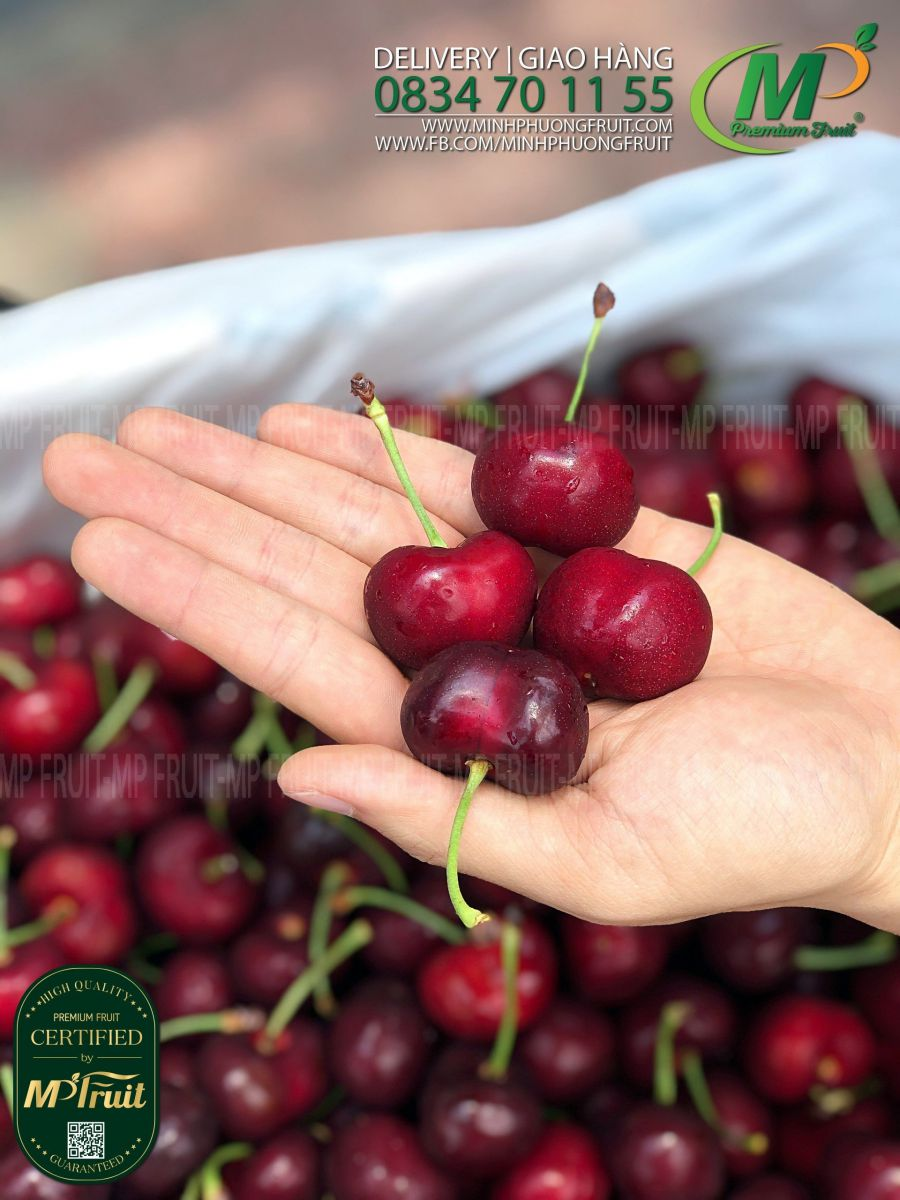 Cherry Đỏ Mỹ Size 8 | Sequoia tại MP Fruits