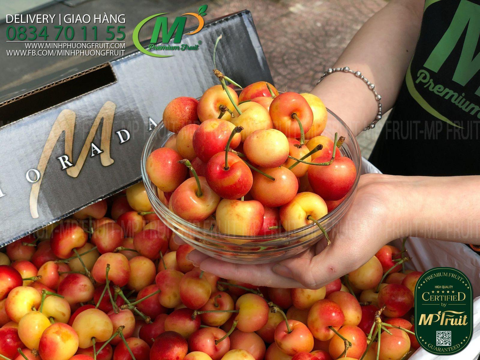 Cherry Vàng Mỹ - Rainier Cherry USA | Morada tại MP Fruits