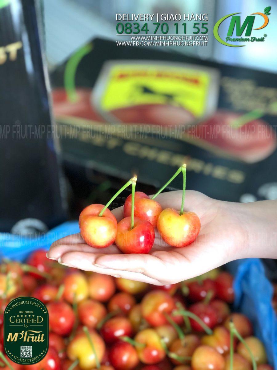 Cherry Vàng Mỹ - Rainier Cherry USA   Appleoosa tại MP Fruits