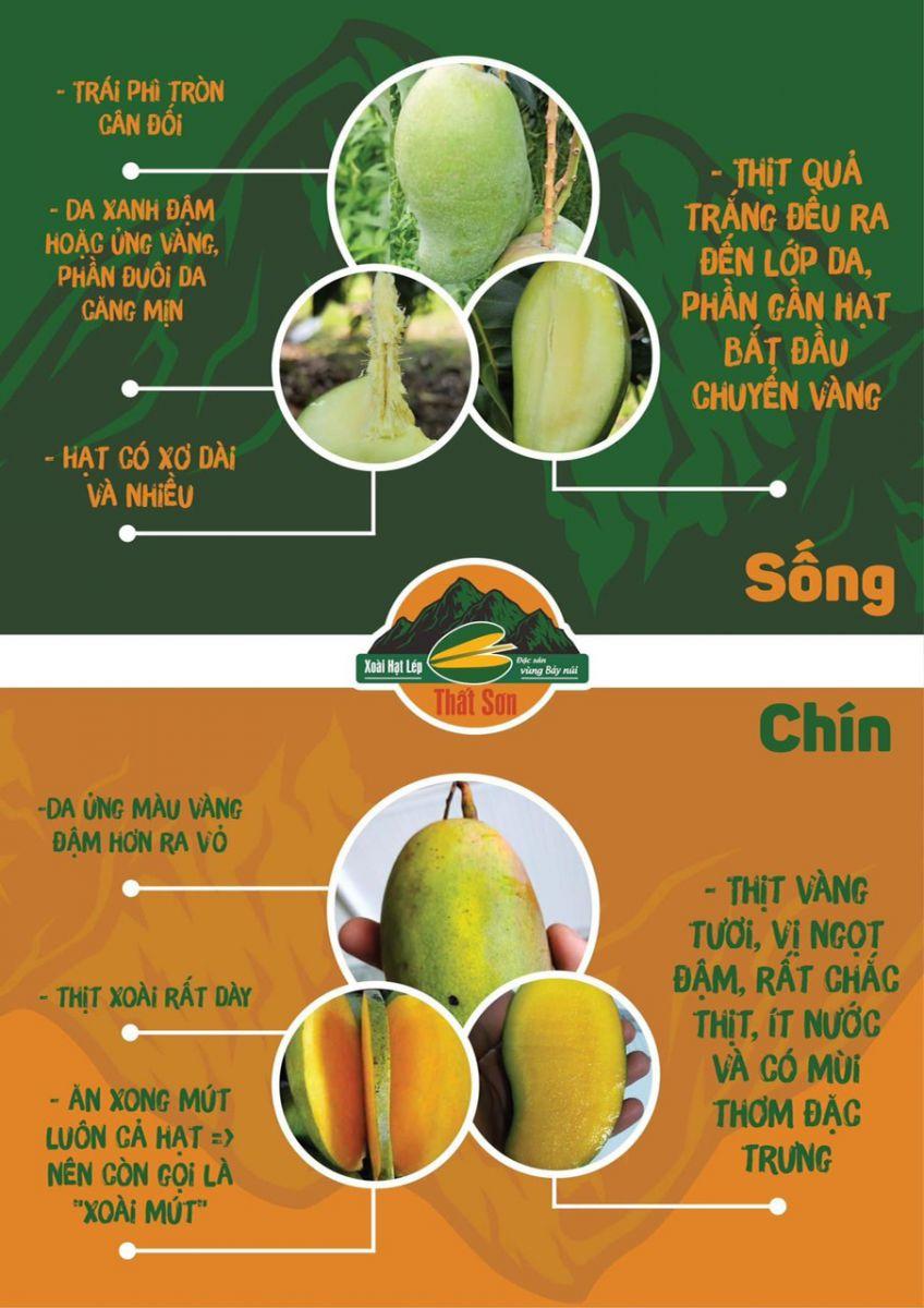 Xoài Hạt Lép Thất Sơn An Giang tại MP Fruit