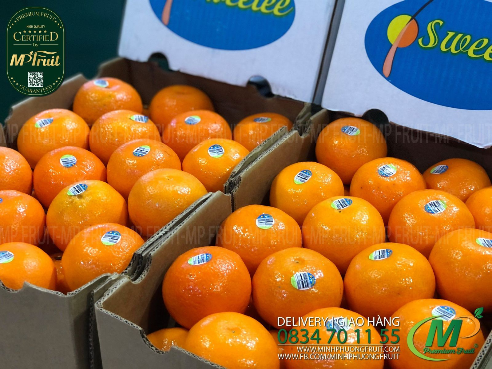 Quýt Daisy Mandarin Úc   Sweetee tại MP Fruits