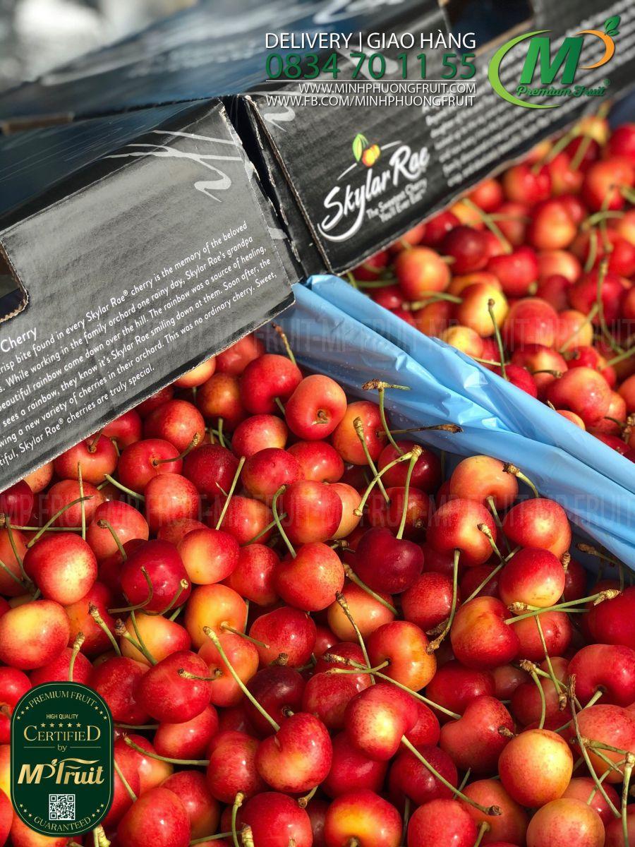 Cherry Vàng Mỹ - Rainier Cherry USA | Skylar Rae tại MP Fruits