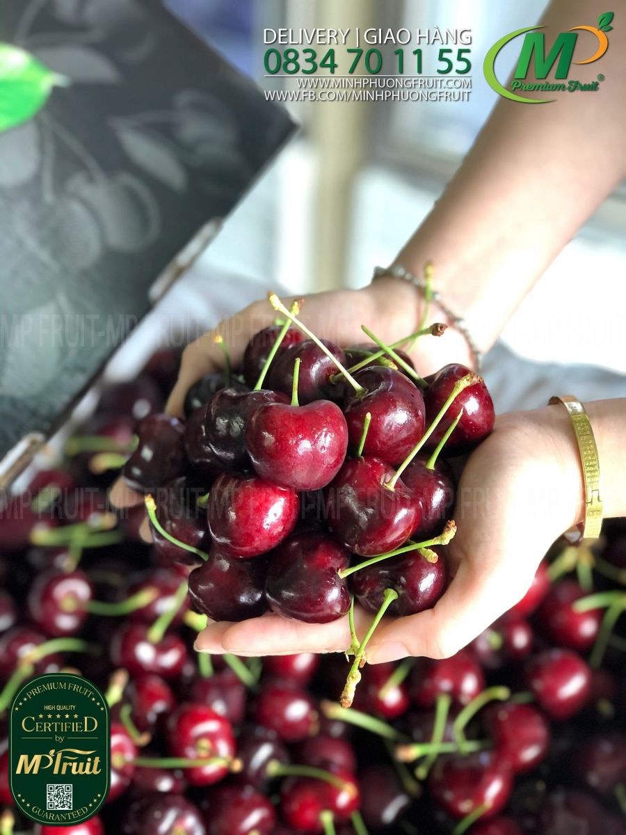 Cherry Đỏ Mỹ Size 8.5 | Rainier Fruit tại MP Fruits