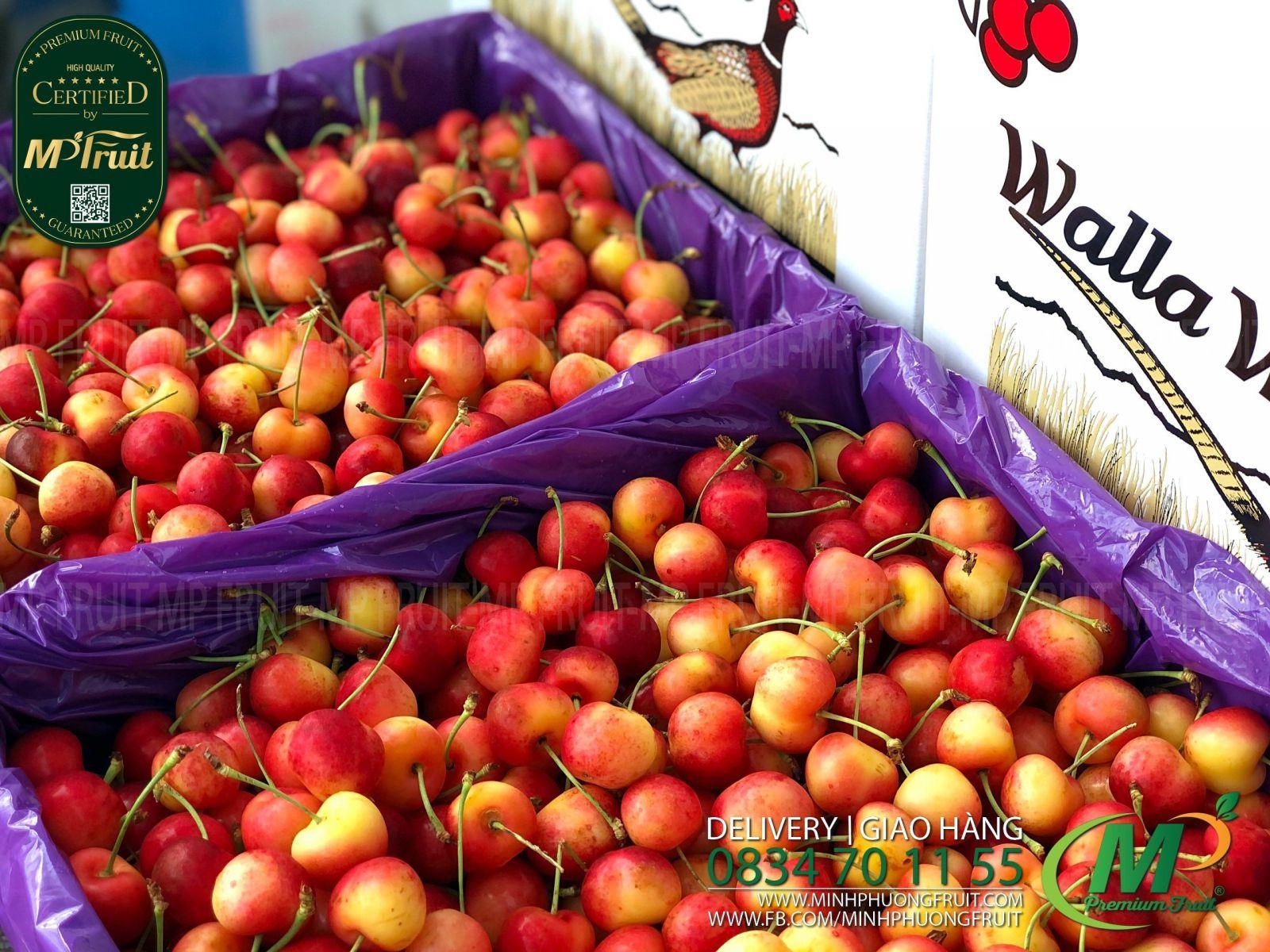 Cherry Vàng Mỹ - Rainier Cherry USA   Walla Walla tại MP Fruits