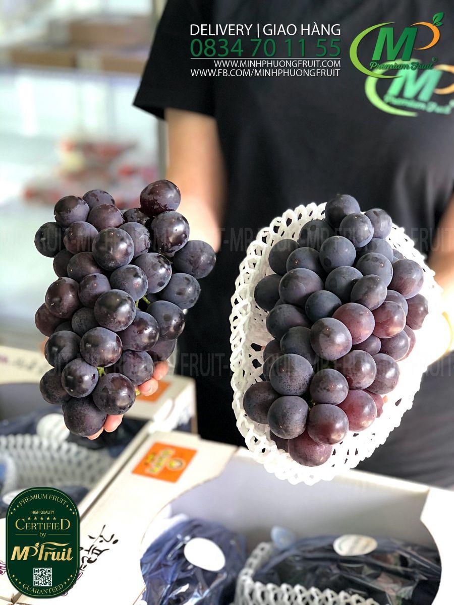 Nho Đen Rượu Kyoho Hàn Quốc | Greenvil tại MP Fruits